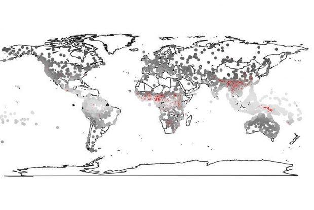 Sprachen in feuchten Gebieten der Erde (helle Kreise) sind häufiger Tonsprachen (rot) als in trockenen Regionen. Foto: MPI f. Psycholinguistik/Roberts