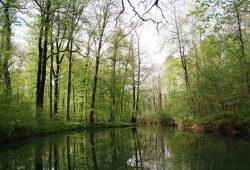 Der Floßgraben im Frühjahr. Foto: Ökolöwe