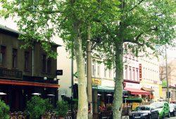 Straßenbäume tragen nicht nur zur Verschönerung des Stadtbildes bei. Foto: BUND - Regionalgruppe Leipzig