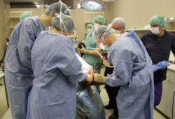 Das Expertenteam während der Operation des kleinen Elefanten. Foto: Zoo Leipzig