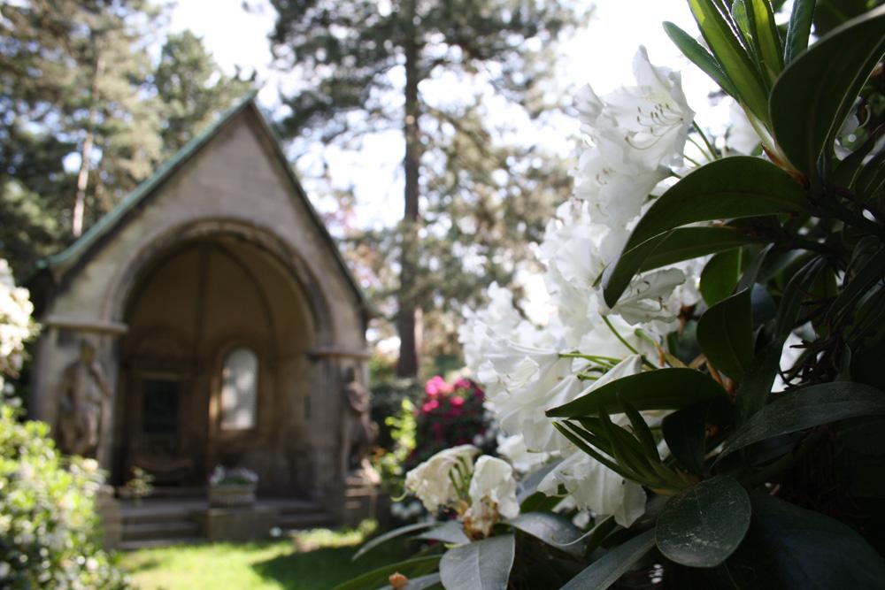 Rhododendron-Blüte auf dem Südfriedhof Leipzig. Foto: Ralf Julke