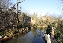 Affeninseln im Gründer-Garten © Zoo Leipzig