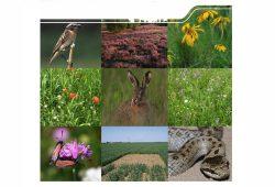 """Cover der Broschüre """"Alternative Förderansätze für natürliche biologische Vielfalt"""". Screenshot: L-IZ"""