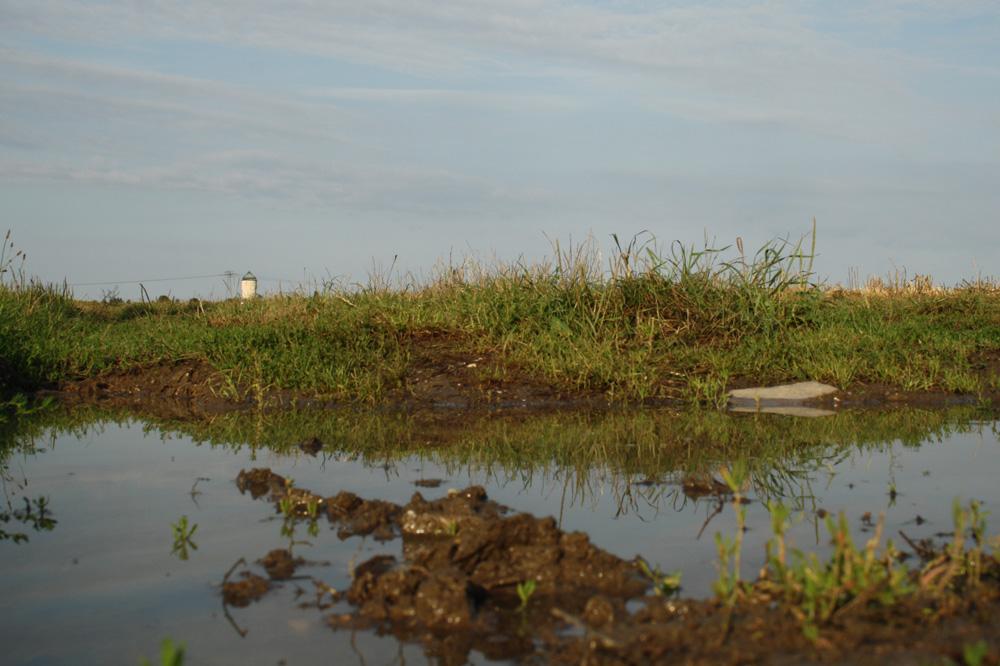 Artenreichtum der Pflanzen an der Oberfläche erhöht auch den Artenreichtum im Boden. Foto: Ralf Julke