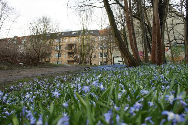Frühblüher am Zugang zur Grünfläche an der Leopoldstraße. Foto: Ralf Julke