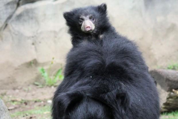 Auf Erkundungstour in der Lippenbären-Schlucht. Foto: Zoo Leipzig