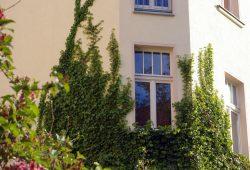 Grüne Fassade in der Leipziger Ecksteinstrasse. Foto: Ökolöwe