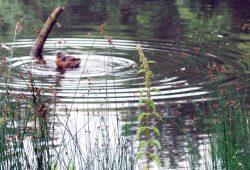 Eine Ente zeiht Kreise. Weil sie es kann. Foto: L-IZ.de