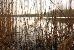 Heute ein wildes Biotop: das Naturbad Großzschocher. Foto: Ralf Julke