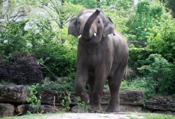 Hallo Leipzig - Voi Nam ist zurück. Foto: Zoo Leipzig