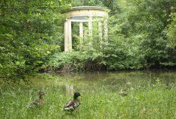 Hier bin ich glücklich: Der Inselteich im Abtnaundorfer Park mit zufriedenen Enten. Foto: Ralf Julke