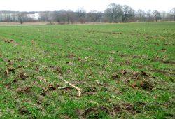 Überdüngung sächsischer Äcker ist Hauptursache für hohe Nitratbelastung im Grundwasser. Foto: Gernot Borriss