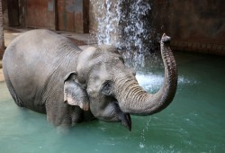 Sommerlicher Badespaß bei den Elefanten. Foto: Zoo Leipzig