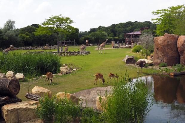 Die Bewohner der Kiwara Savanne. Foto: Zoo Leipzig