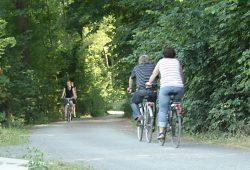 Radfahrer auf einem Weg im südlichen Auenwald. Foto: Ralf Julke