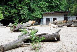 Wildpferdjungtier auf der Außenanlage. Foto: Zoo Leipzig