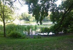 Teich im Arthur-Bretschneider-Park. Foto: AHA