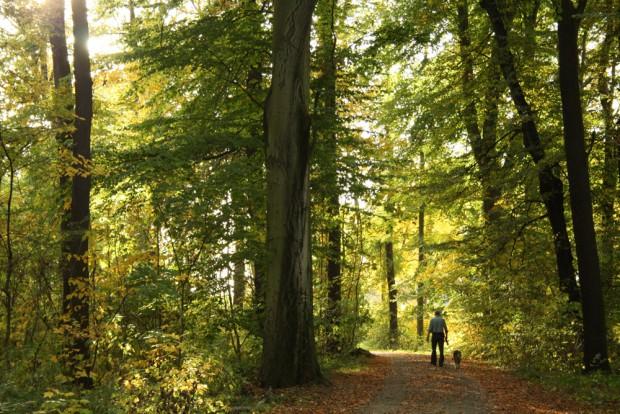 Rettung für viele Hitzegeplagte: der Leipziger Auwald. Foto: Ralf Julke