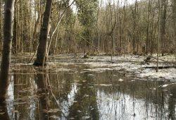 Auenwald im Wasser: Der Leipziger Auenwald steht natürlich fast am Ende der Ereigniskette. Viel wichtiger für den Hochwasserschutz sind die Waldbestände in den Hochwasserentstehungsgebieten. Foto: Ralf Julke