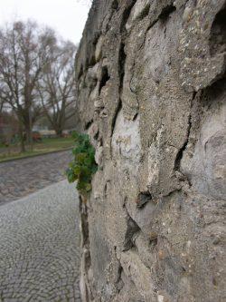 Alte Schloss-Mauer mit frischem Grün. Foto: Karsten Pietsch