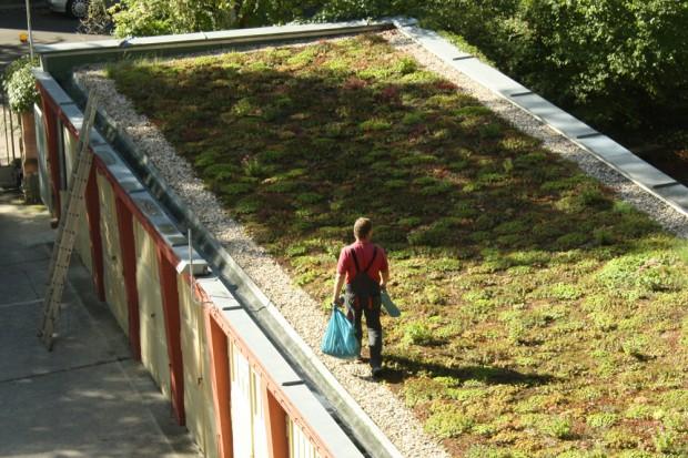 Garagendächer eignen sich ideal für Begrünung - wie hier am Haus der Demokratie in Connewitz. Foto: Ralf Julke