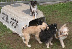 Haben im Leipziger Tierheim Zuflucht gefunden: eine Handvoll junger Hunde. Foto: Marko Hofmann