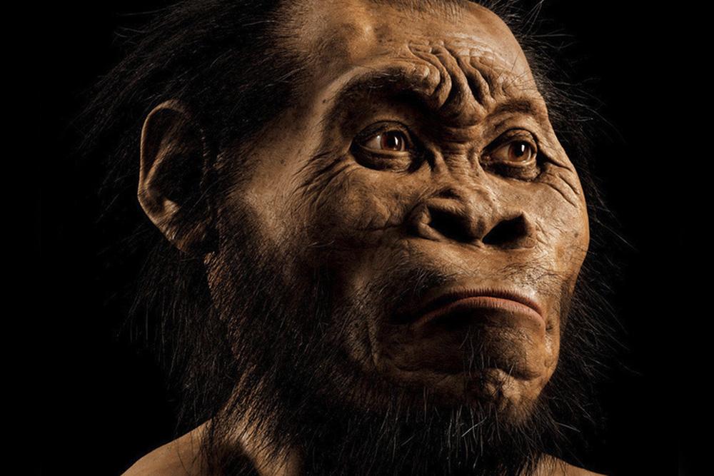 Modellierter Kopf von Homo naledi. Rund 700 Stunden Arbeit kostete es den Paläokünstler John Gurche, den Kopf aus den erhaltenen Knochen zu rekonstruieren. (aus der Oktober-Ausgabe von National Geographic). Foto: Mark Thiessen/National Geographic