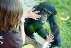 Bei den Entdeckertagen die Affenarten kennenlernen. Foto: Zoo Leipzig
