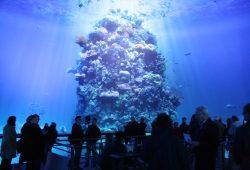 """Das """"Great Barrier Reef"""" als große Panorama-Inszenierung. Foto: Ralf Julke"""