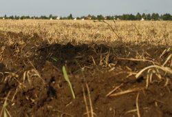 Man sieht dem Ackerboden nicht an, in welchem Zustand das Grundwasser darunter ist. Foto: Ralf Julke