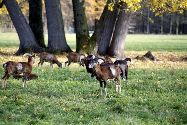 Wildpark-Gehege. Foto: Alexander Böhm