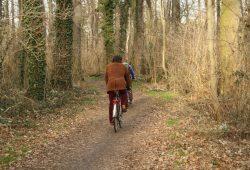 Zu warm, zu mild, zu trocken: Der Leipziger Auwald im März 2015. Foto: Ralf Julke