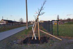 Zerstörter Baum am Bürgerbahnhof Plagwitz. Foto: Joachim Eckstein