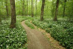 Auch bei Querfeldein-Tramplern beliebt: Auwald im Frühjahr. Foto: Ralf Julke