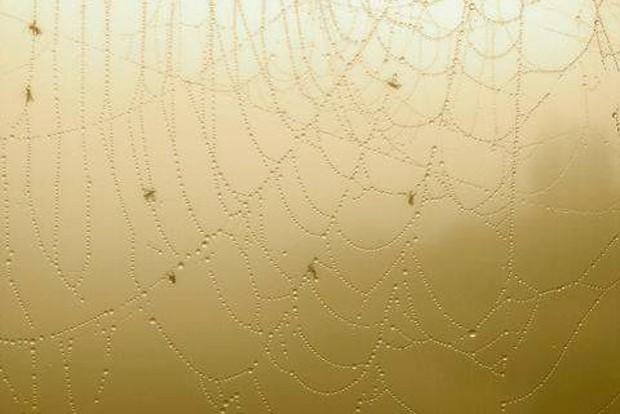 Im Netz verfängt sich immer so allerlei. Foto: Daniel Thalheim