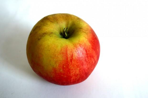 Diesen Apfel der ganzen Welt ... Foto: Ralf Julke
