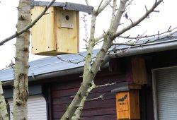 Gartenlaube mit Fledermauskasten und Vogelhäuschen. Foto: NABU Leipzig