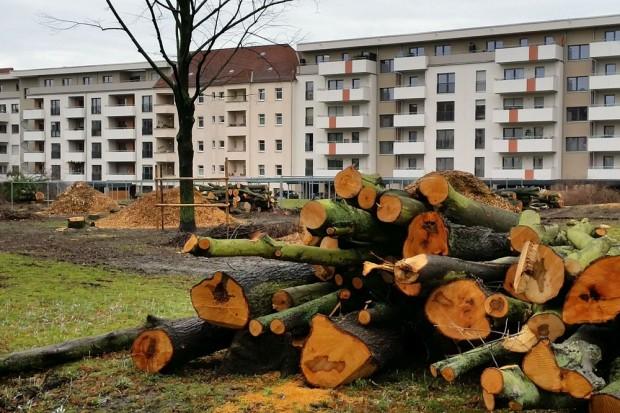 Fällungen Bernhard-Göring-Straße. Foto: Anwohner; Ökolöwe