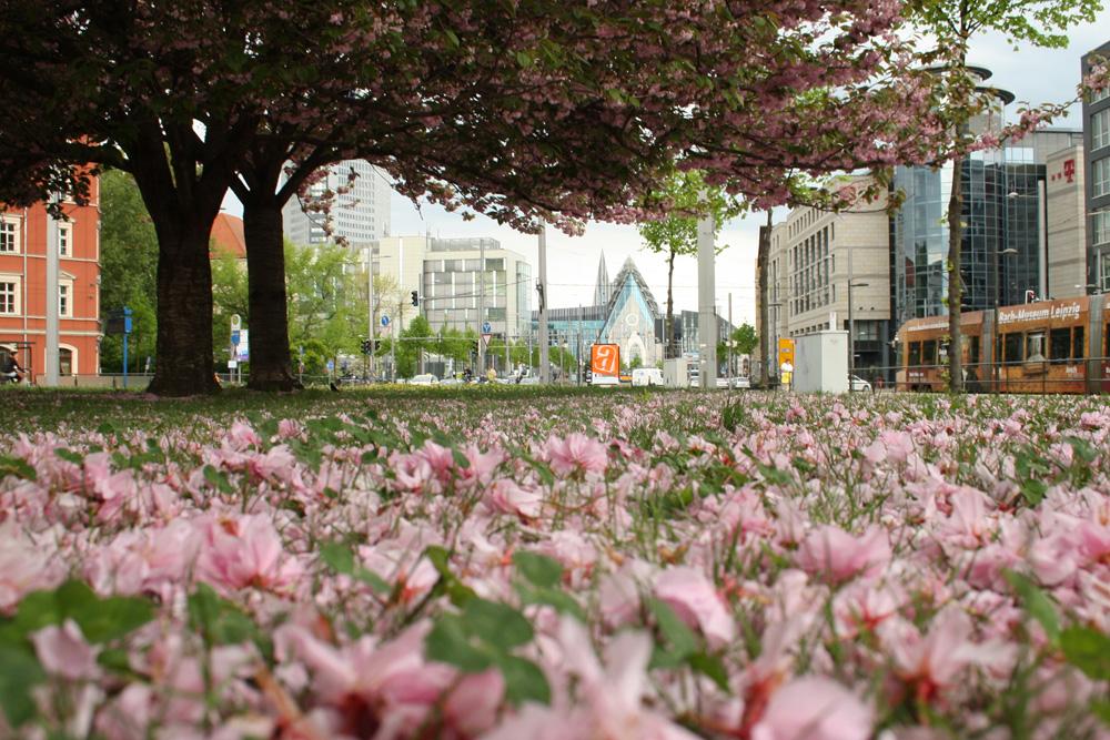 Die Installation für Leibniz sollte auf dem Johannisplatz stattfinden. Foto: Ralf Julke