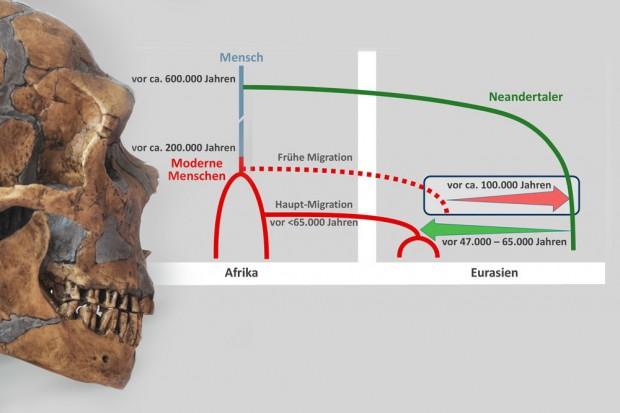 Neandertalerschädel und wahrscheinliche Begegnungen von Neandertaler und modernem Menschen. Foto: MPI für evolutionäre Anthropologie / Grafik: Ilan Gronau
