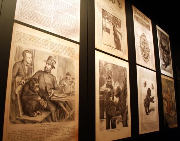 """Sensation auch in den Publikumszeitschriften des 19. Jahrhundert - wie hier in der """"Gartenlaube"""" mit Alfred Brehm und seinem Schimpansen. Foto: Ralf Julke"""