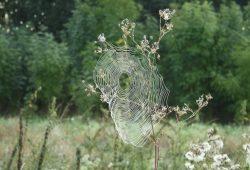 Mal als Sinnbild für eine gute Netzstruktur: Spinnennetz in der Leipziger Aue. Foto: Ralf Julke
