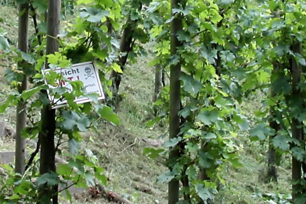 Das Schild im Weinhang kam nur ganz zufällig mit ins Bild. Foto: Matthias Weidemann