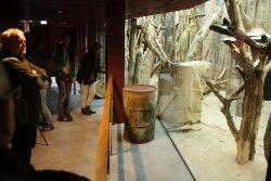 Durch große Schaufenster kann der Besucher ins Klettergehege der Koalas blicken. Foto: Ralf Julke