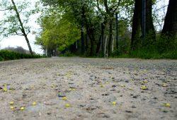 Abgefahren bis auf den blanken Schotter: Weg an der Rennbahn. Foto: Ralf Julke
