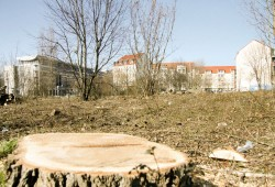 Bäume mussten für Studentenwohnheim weichen. Foto: Moritz Arand