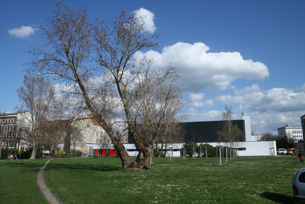 Geplanter Bauplatz: Die Wiese westlich der Sporthalle Brüderstraße. Foto: Ralf Julke