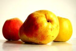 Manchmal ergeben die ausgewählten Produkte einfach einen hübschen Obstsalat. Foto: Ralf Julke