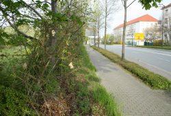 Die für das Polizeirevier Nord geplante Grünfläche (links) mit Blick zu den Gebäuden der Bereitschaftspolizei. Foto: Ralf Julke