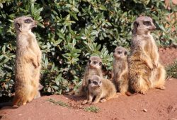 Mit der ganzen Familie zum Kindertag in den Zoo. Foto: Zoo Leipzig